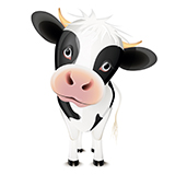 Little black and white cow isolated on white background
